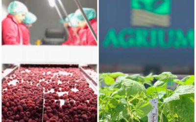 AGRIUM FRUITS SHPK – STORIE E VEÇANTË SUKSESI